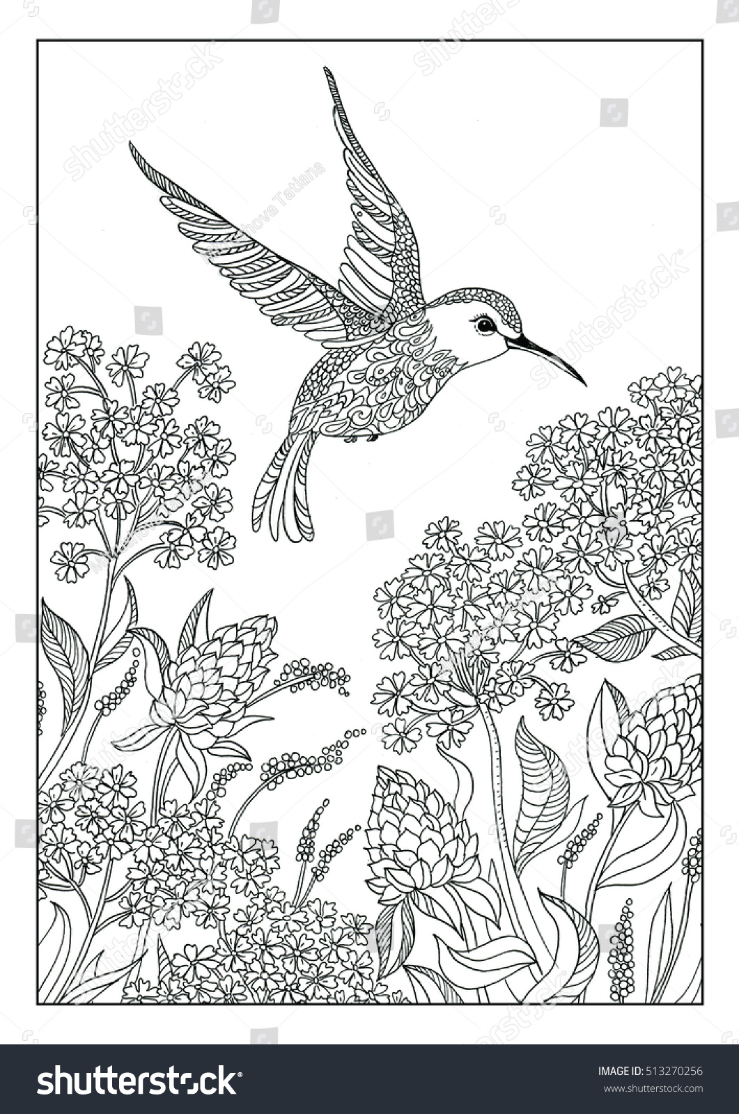 Coloring Book. Page For Coloring For Adults And Children .bird Hummingbird  And Exotic Flowers