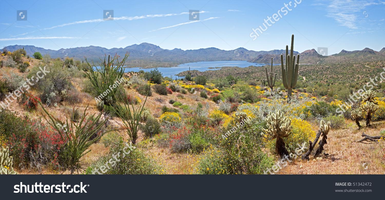 Various - Desert Encounters