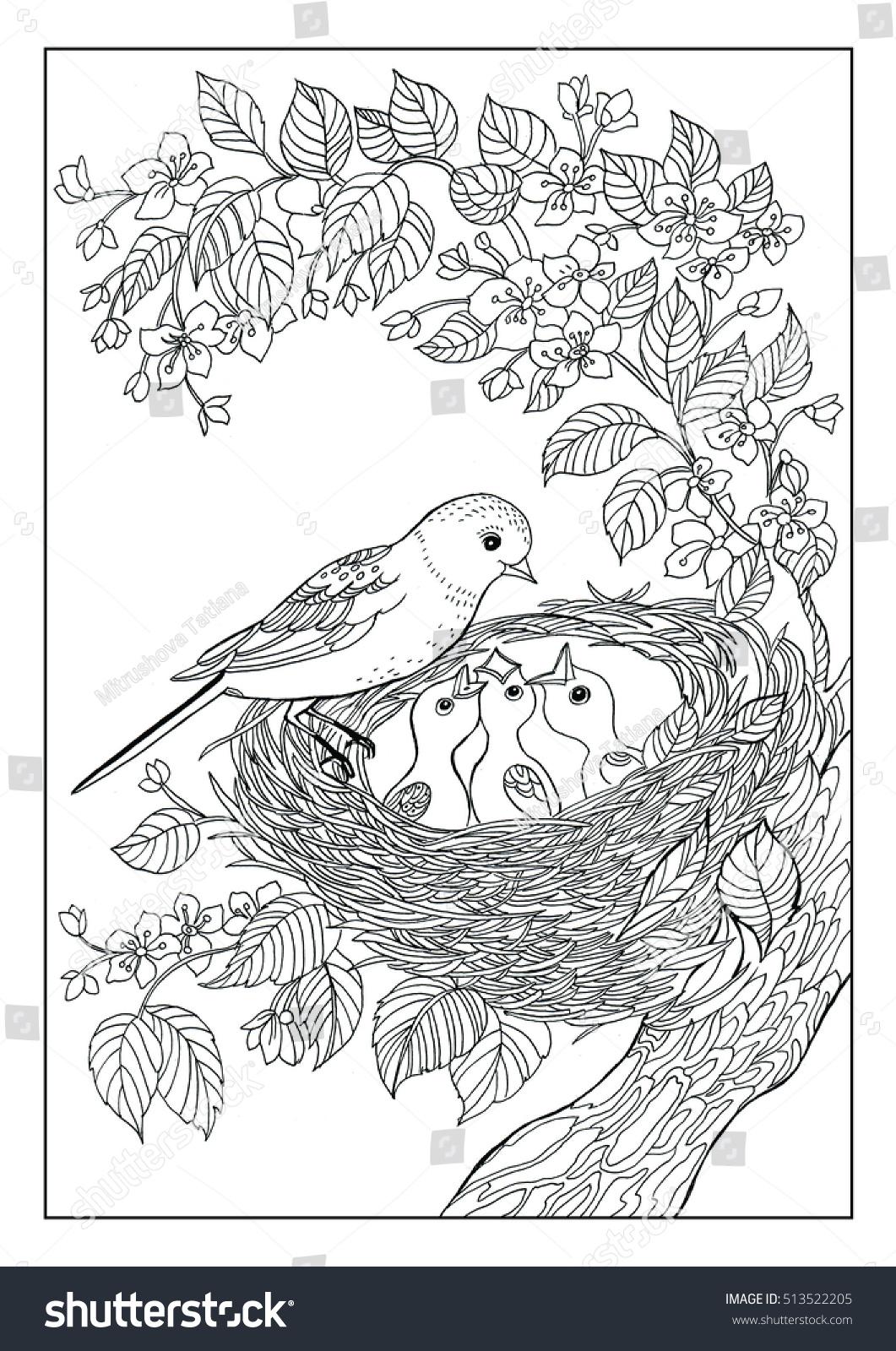 Coloring Book Twenty Pages Birds Nest Stock Illustration 513522205 ...