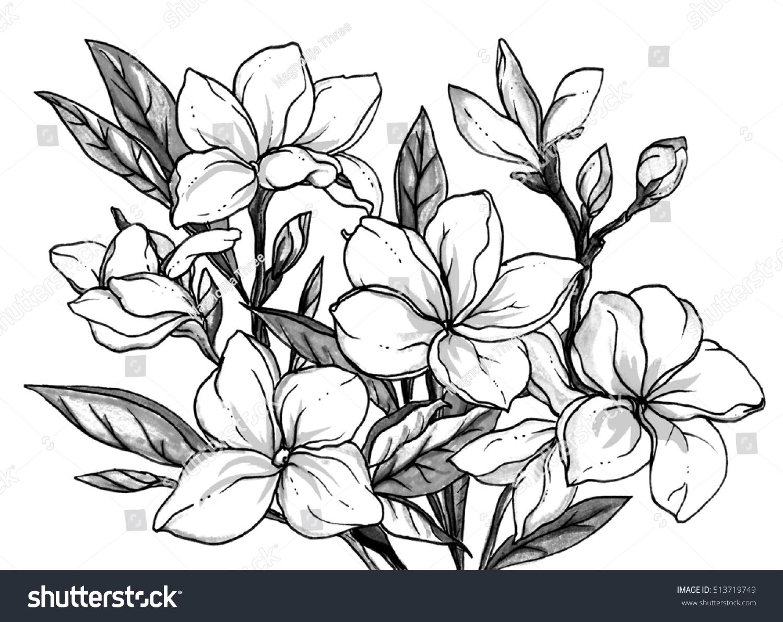Royalty-free Plumeria frangipani flower blossom.… #513719749 Stock ...