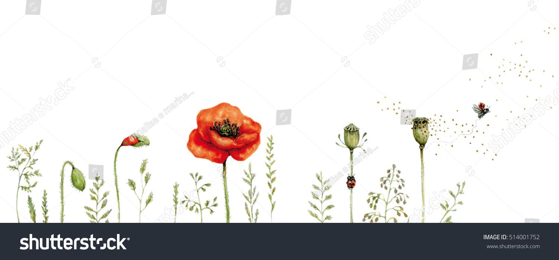 Realistic Illustration Life Cycle Poppy Papaver Stock Illustration