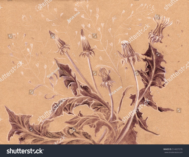 Dandelion Plant Pastel Drawing Wallpaper Printed Stock Illustration 514027270