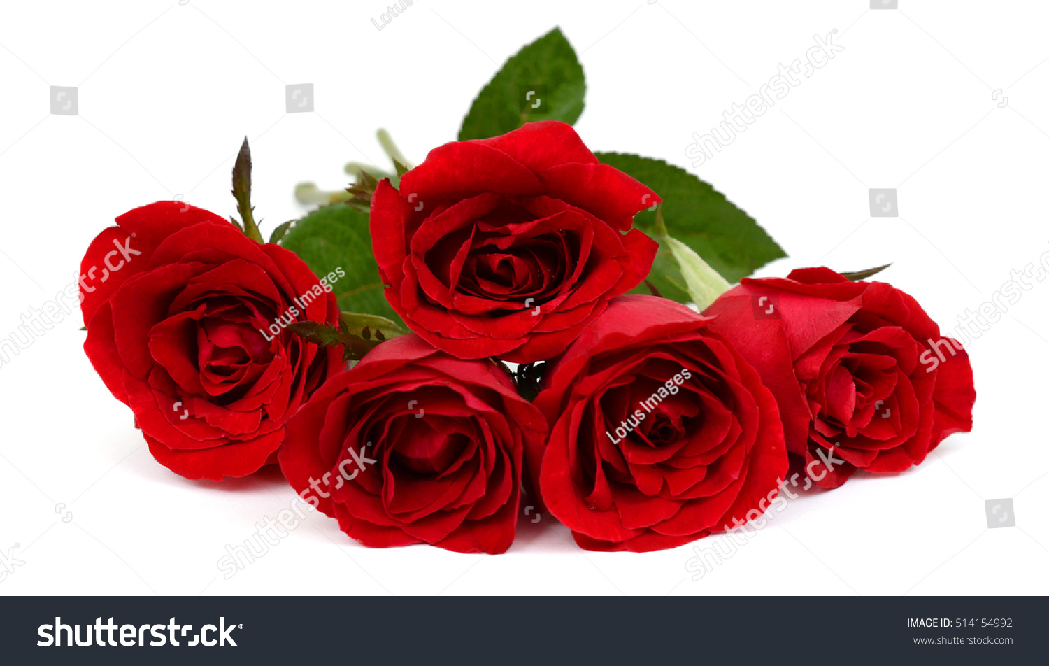Chic Red Roses On A White Background Flowers On A White Background