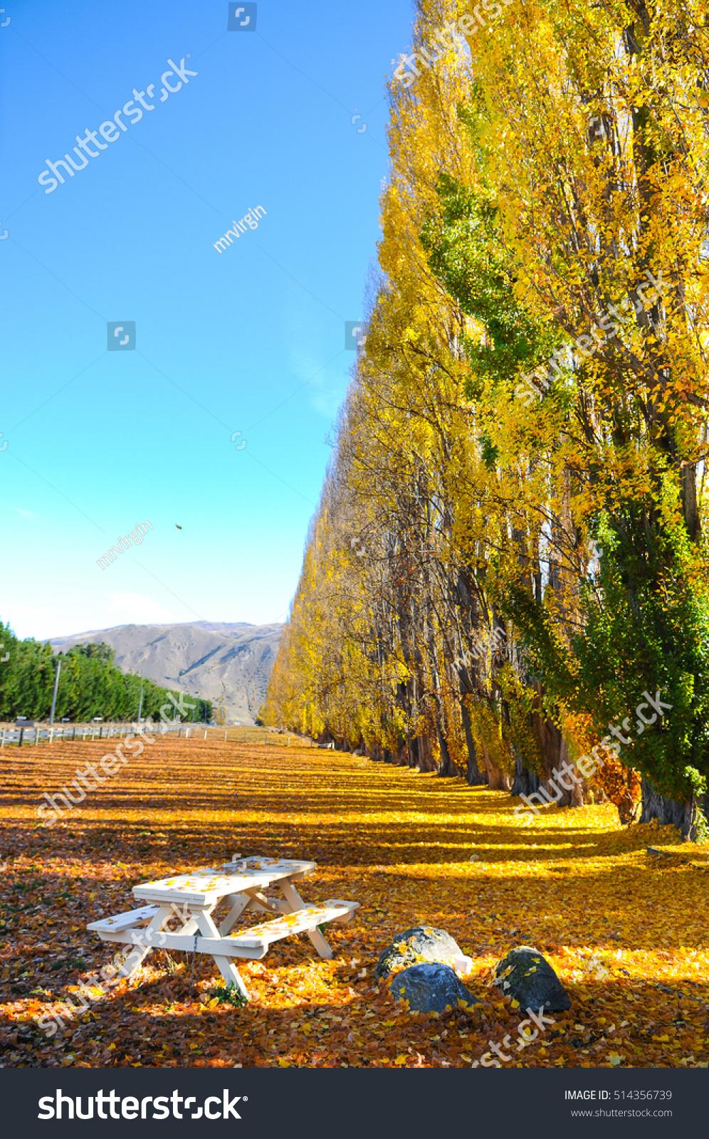 autumn tree beautiful nature new zealand stock photo (edit now