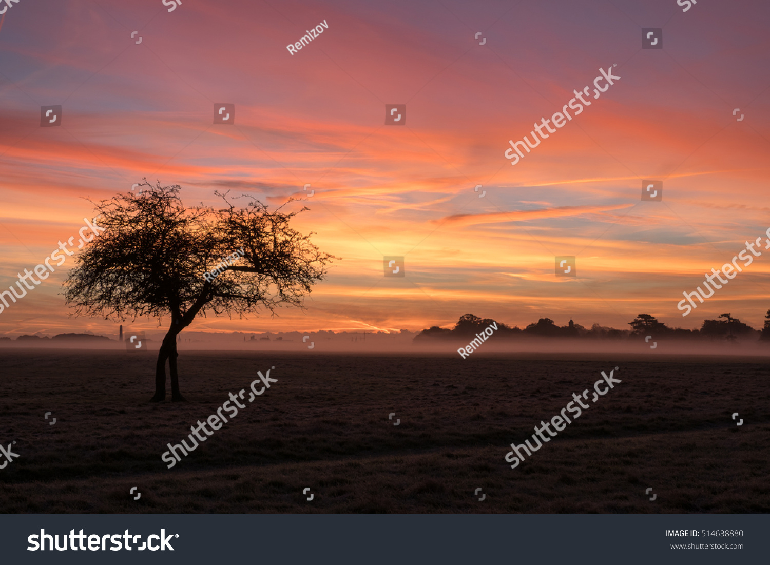 lone tree phoenix park dublin sunrise stock photo edit now