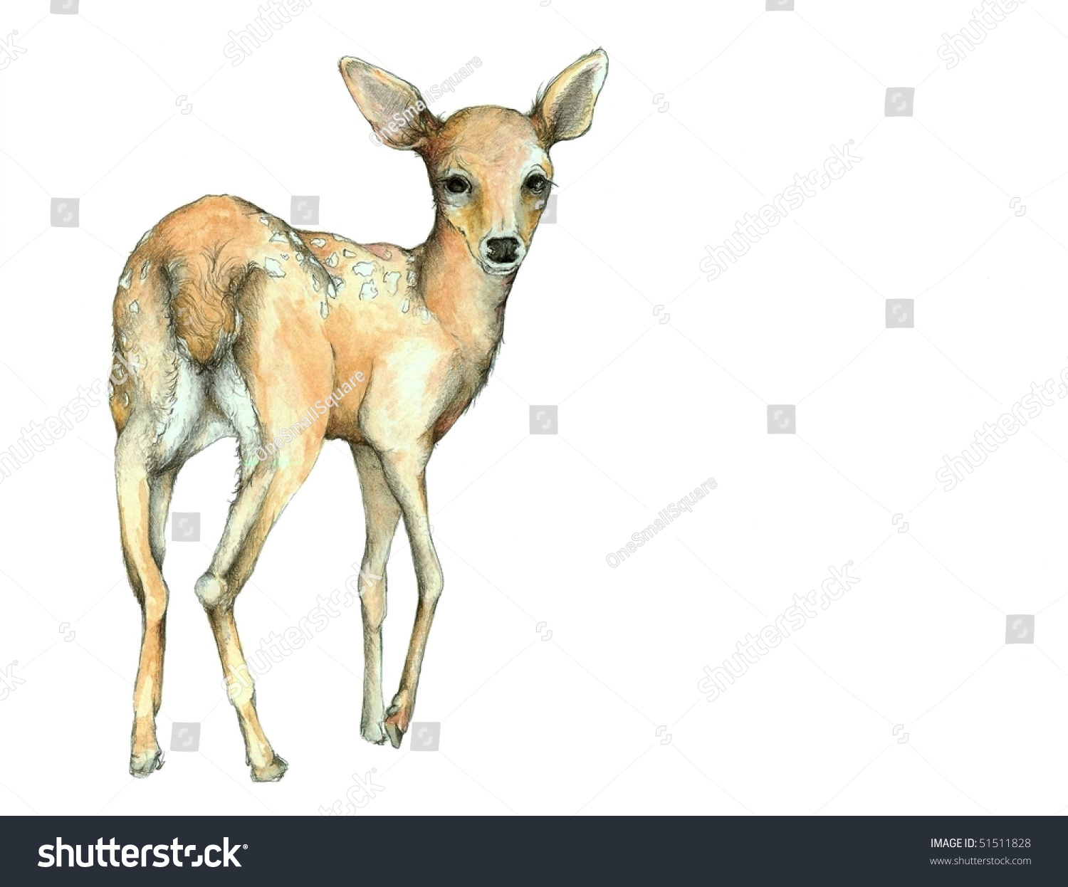 Watercolor Graphite Fawn Illustration Stock Illustration ...