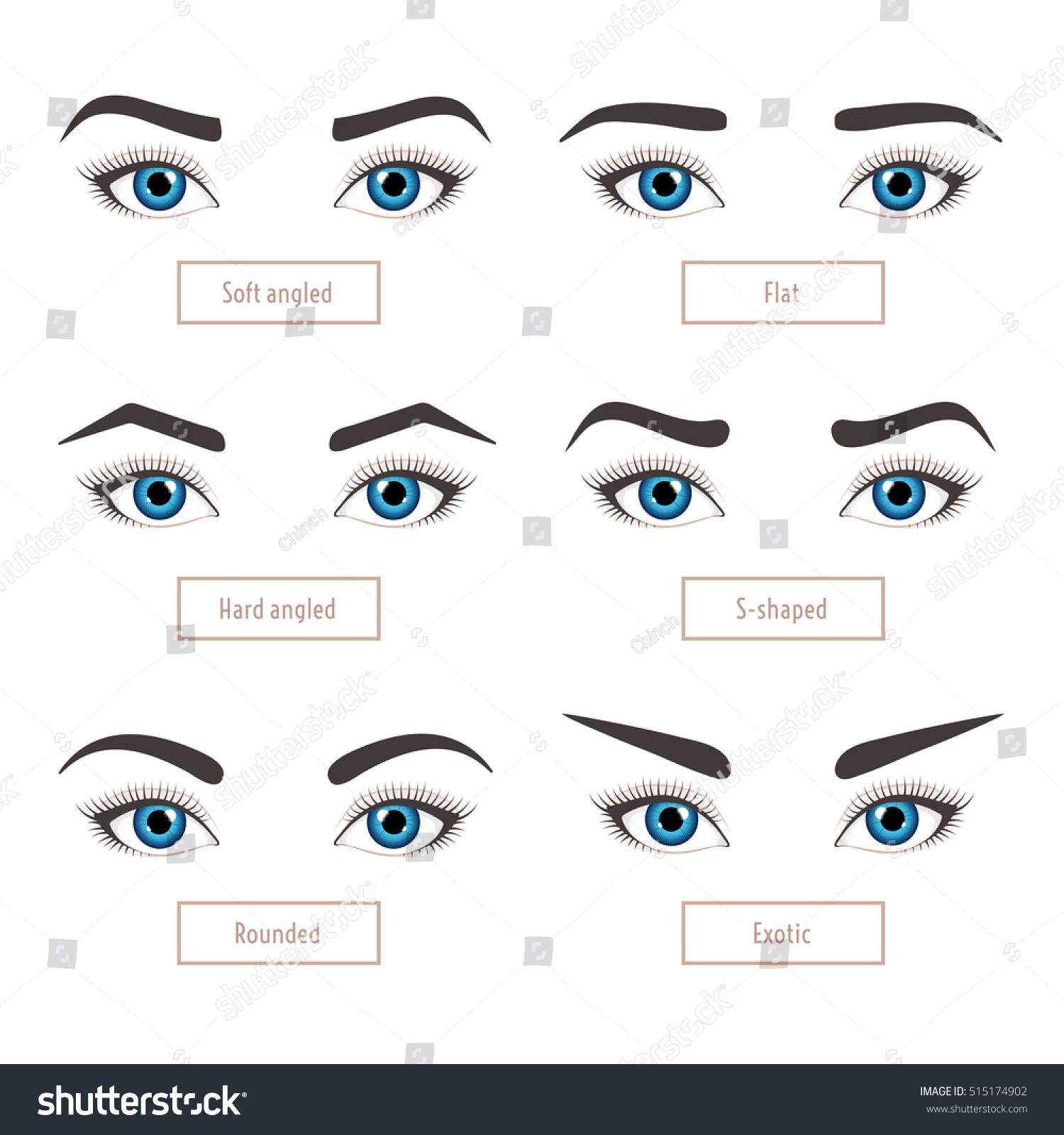 6 Basic Eyebrow Shape Types Classic Stock Vector Royalty Free