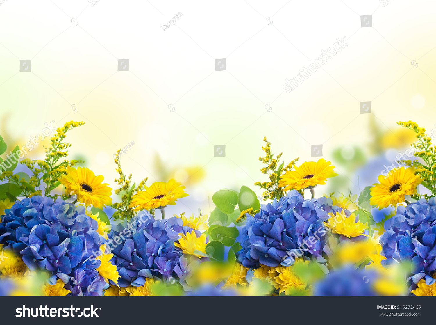 Amazing Background Hydrangeas Daisies Yellow Blue Stock Photo Edit