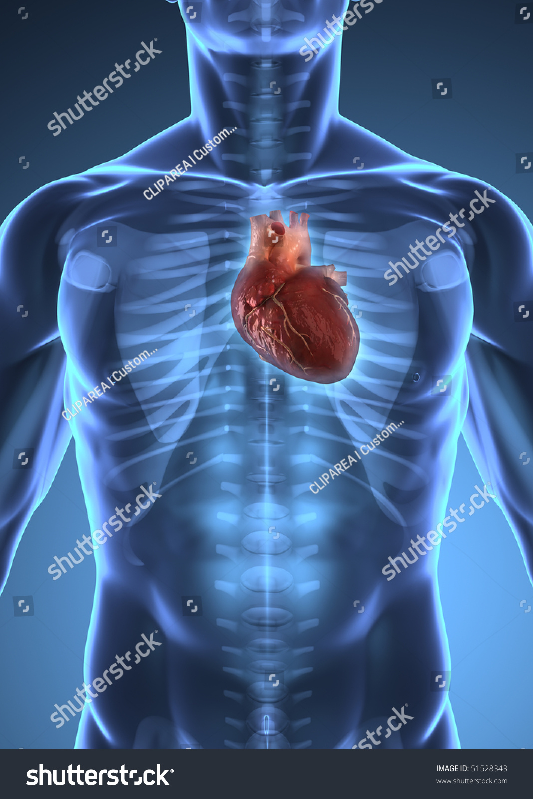 Human Heart Inside Human Xray Body Stock Illustration 51528343
