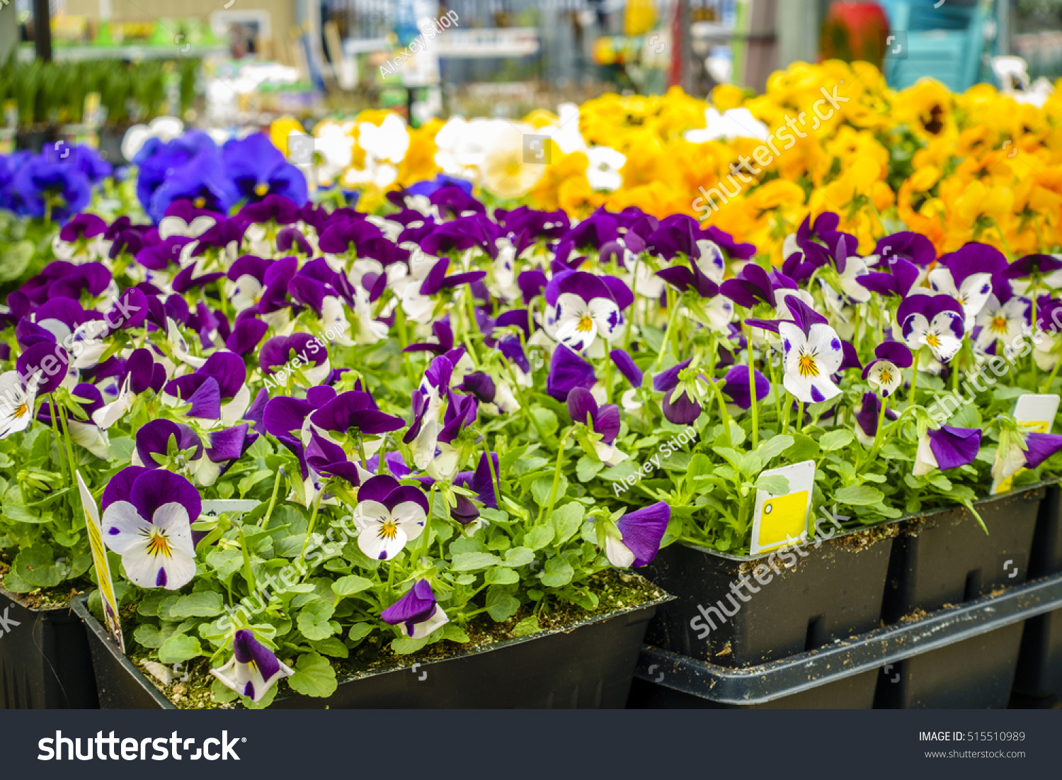 Potted Flowers Plants On Display Home Stock Photo Royalty Free