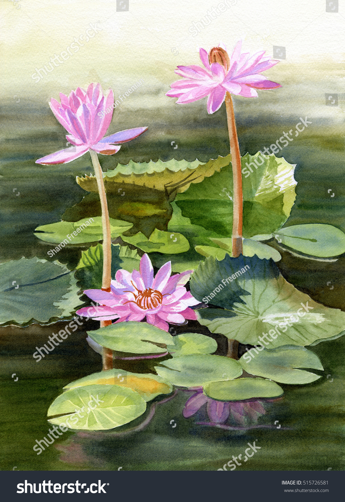Three Pink Water Lilies Pads Watercolor Stock Illustration 515726581
