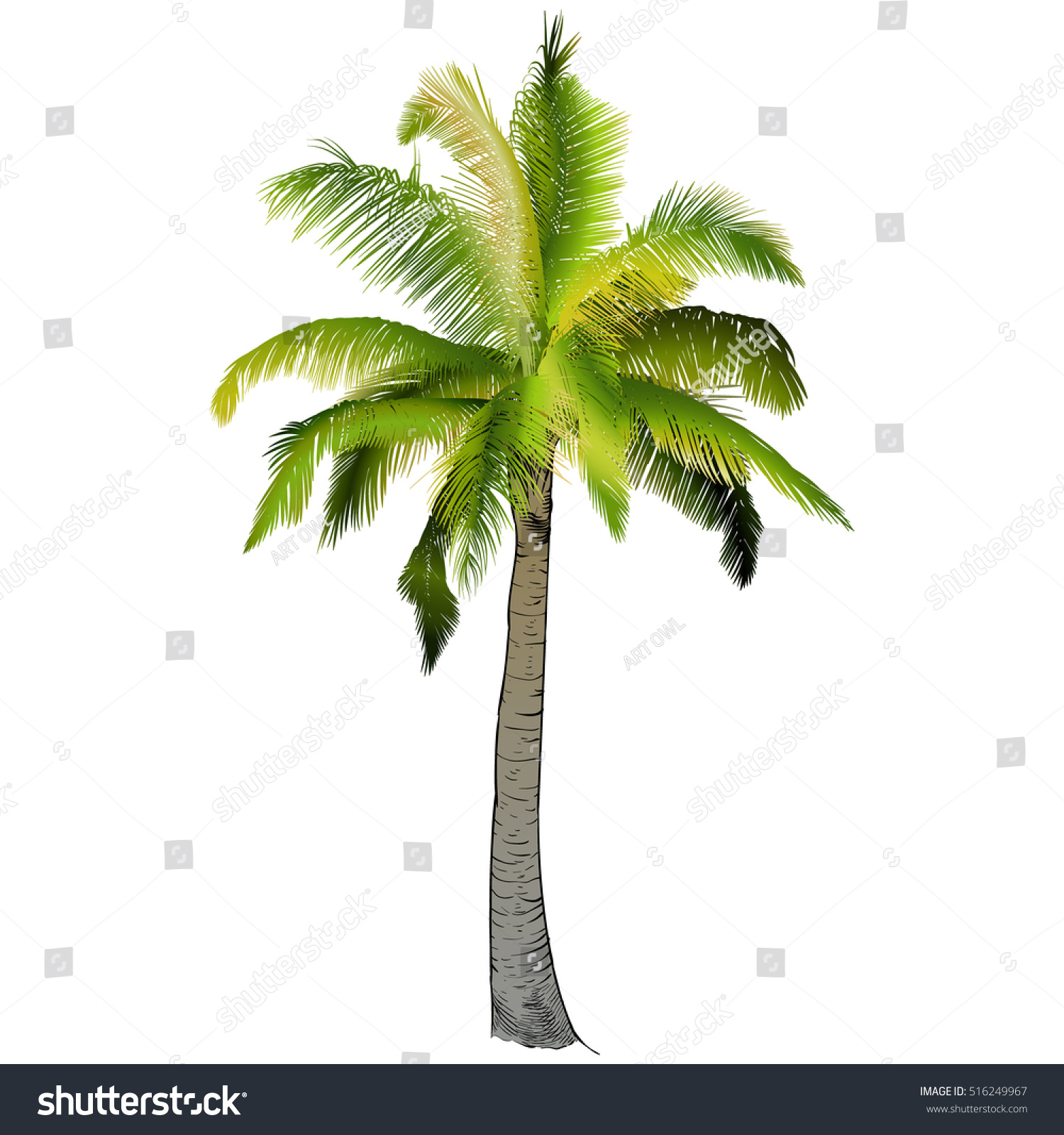 Uncategorized Drawing Palm Trees vector illustration on graphic tablet hand stock 516249967 a drawing palm tree branches of palm