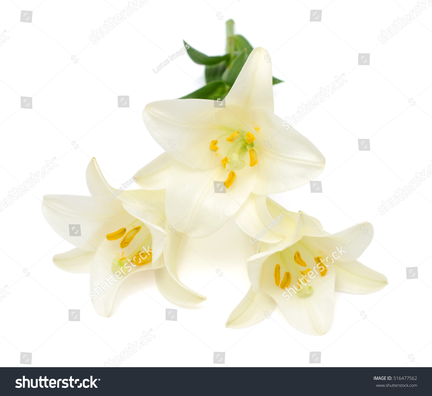 Beautiful white easter lily flower bouquet stock photo edit now beautiful white easter lily flower bouquet isolated on white background izmirmasajfo