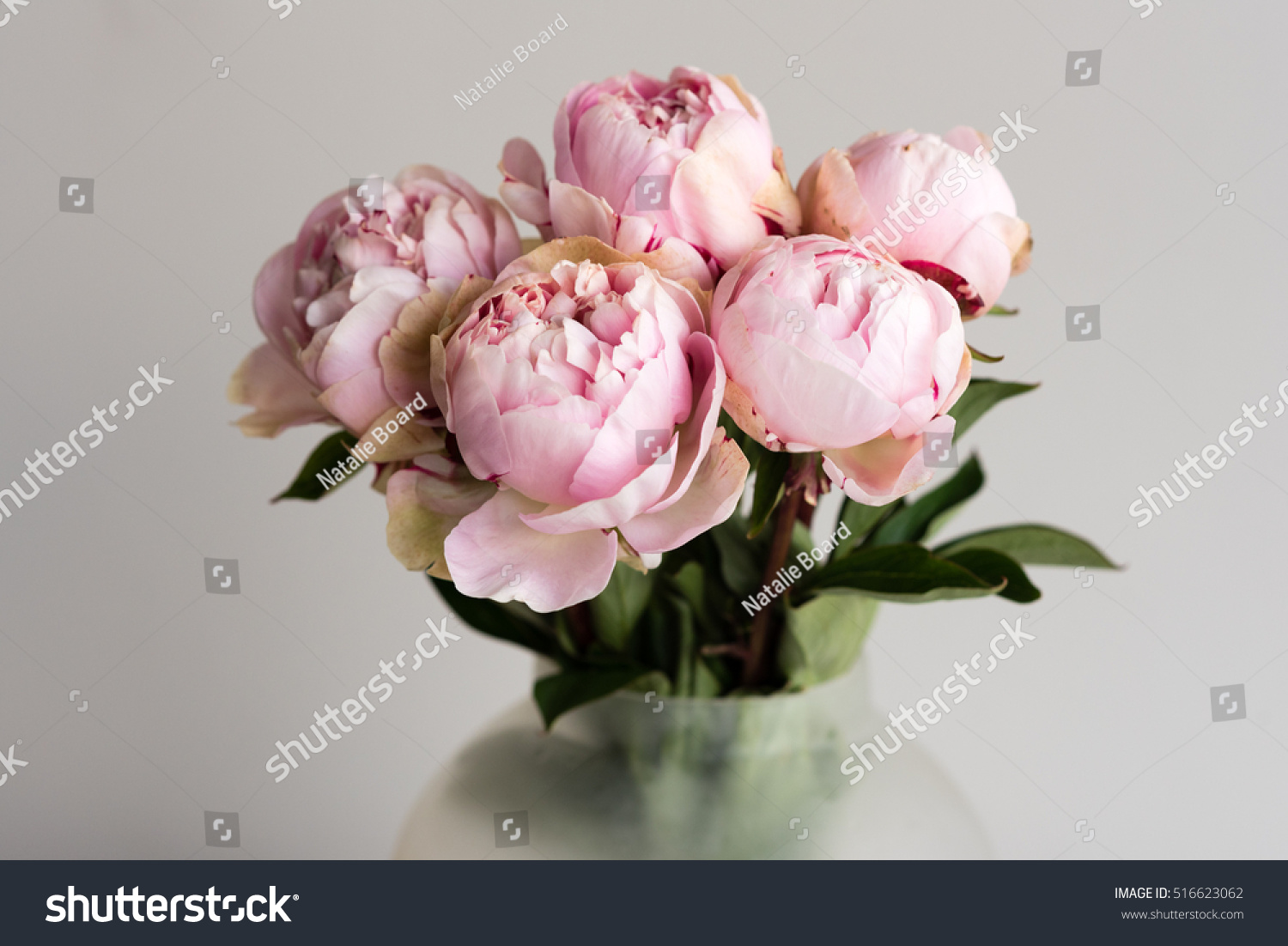 Close pink peonies glass vase against stock photo 516623062 close up of pink peonies in glass vase against neutral background selective focus reviewsmspy