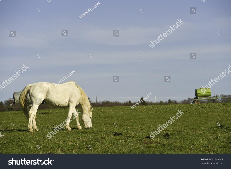 White horse eating grass - photo#13