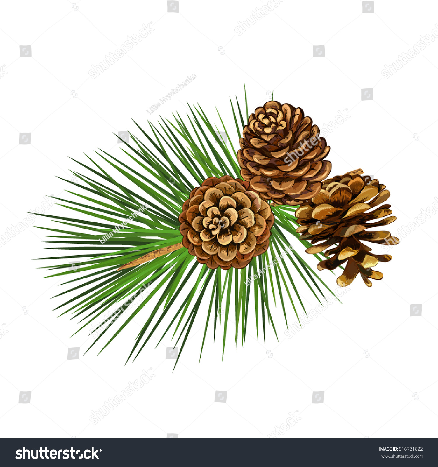 Pine Cone Illustration Vector Illustration Pi...