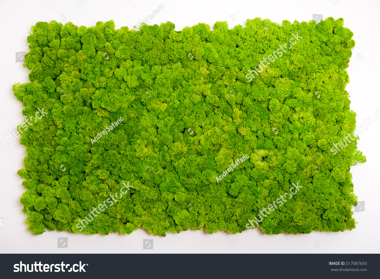 reindeer moss wall green wall decoration stock photo 517087693 shutterstock. Black Bedroom Furniture Sets. Home Design Ideas
