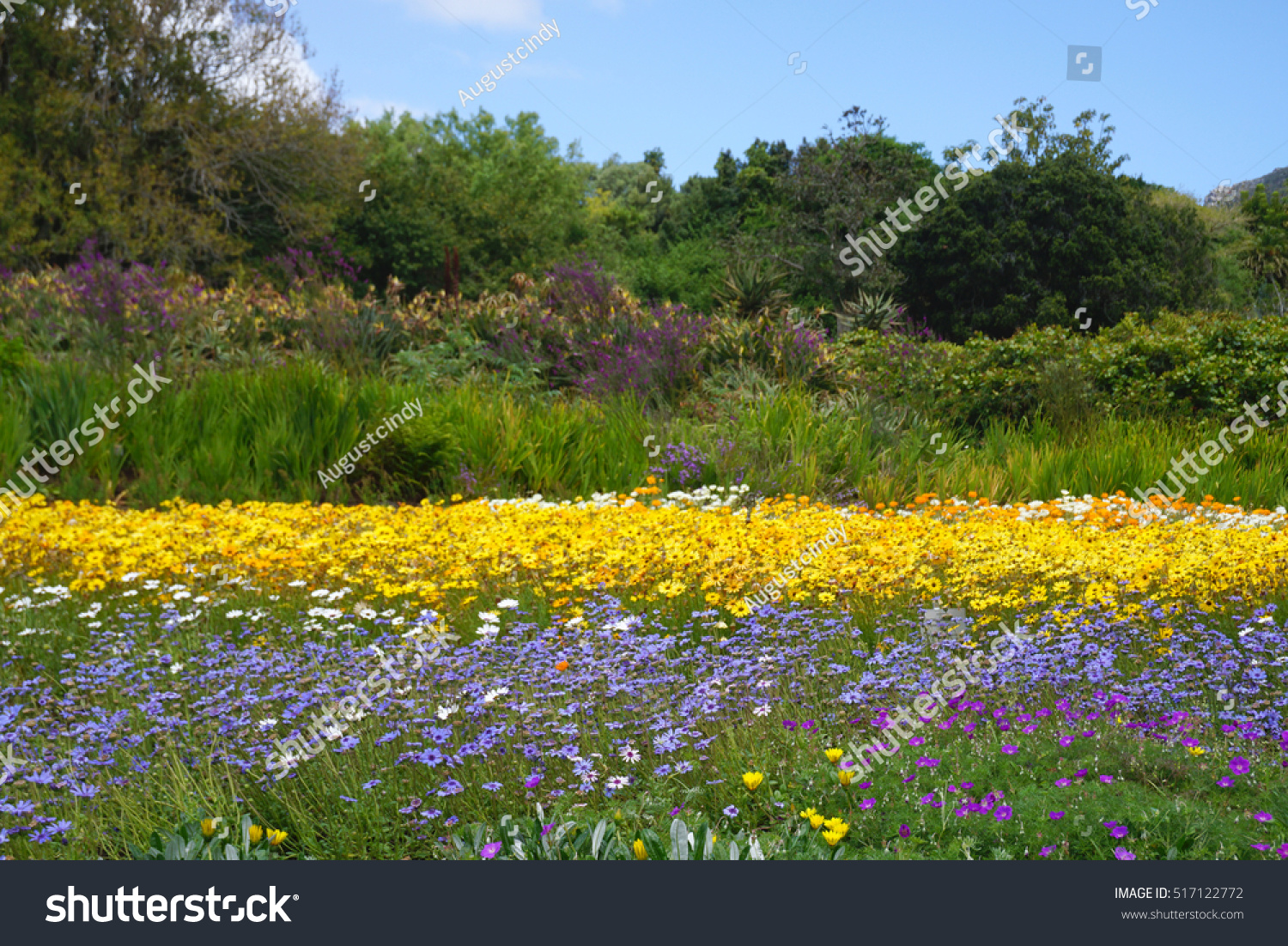 Beautiful purple yellow flower bed landscape stockfoto for Green plants for flower beds