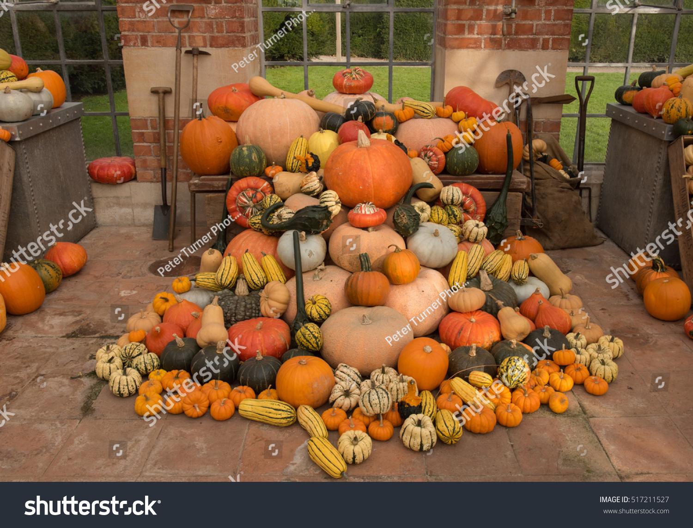 Autumnal Display Home Grown Organic Winter Stock Photo (Edit Now ...