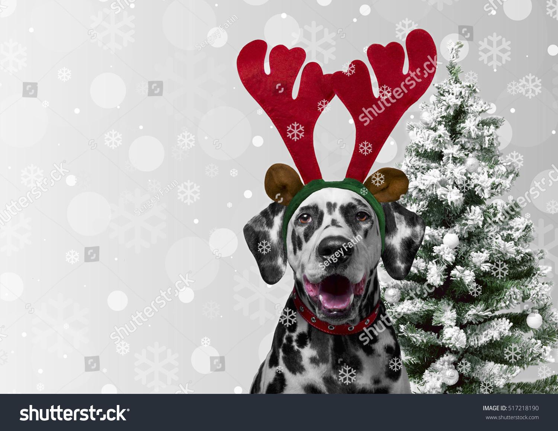 Christmas Card Dog Dalmatian Dress New Stock Photo Edit Now