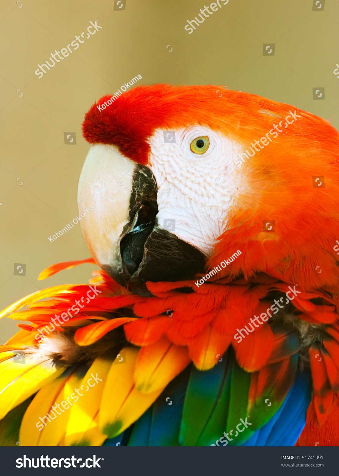 Macaw Colorful Plumage - Venezuela Stock Photo, Royalty Free Image ...