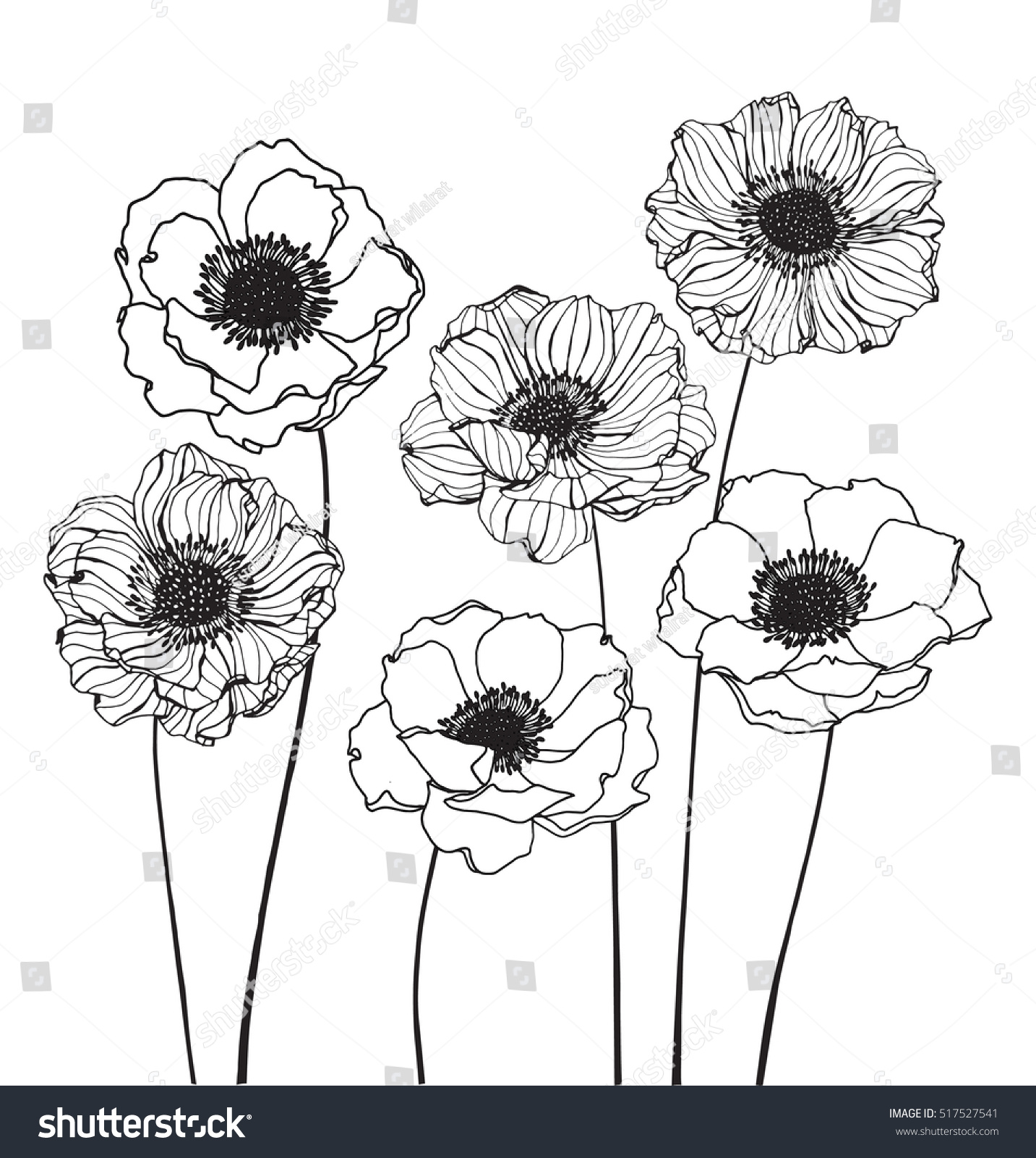 Anemone Flower Line Drawing : Collection set anemone flower by hand stock vector
