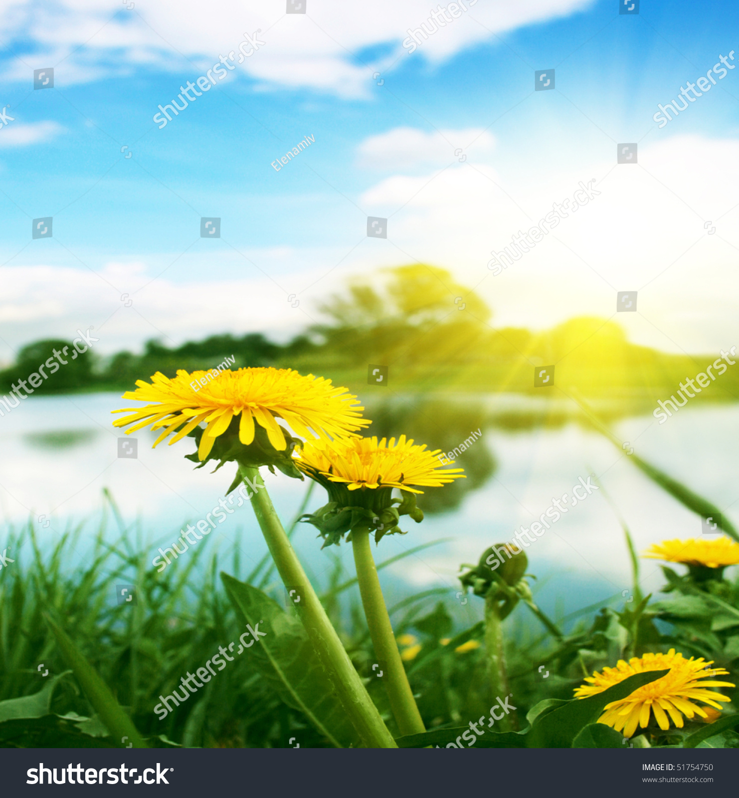 Yellow Dandelions,Blue Sky And Sun. Stock Photo 51754750