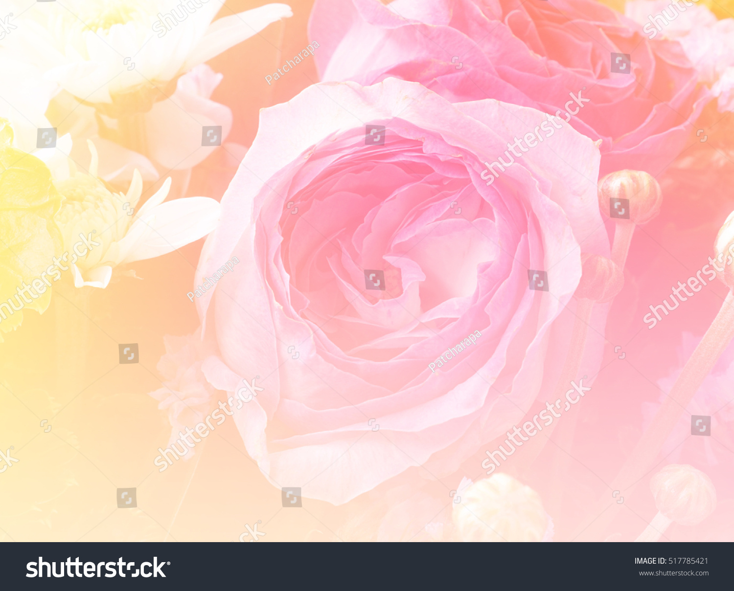 Pink rose flower bouquet background made with color filter effect id 517785421 izmirmasajfo