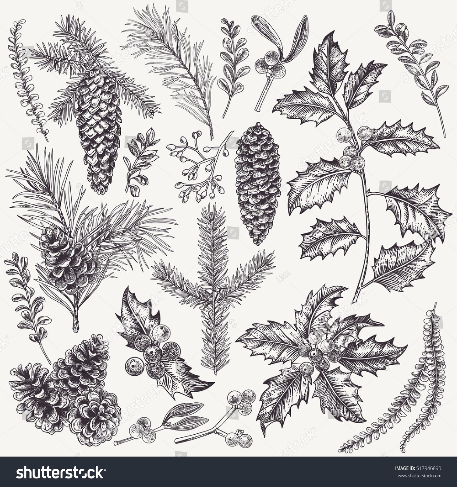 vector set christmas plants botanical illustration stock vector