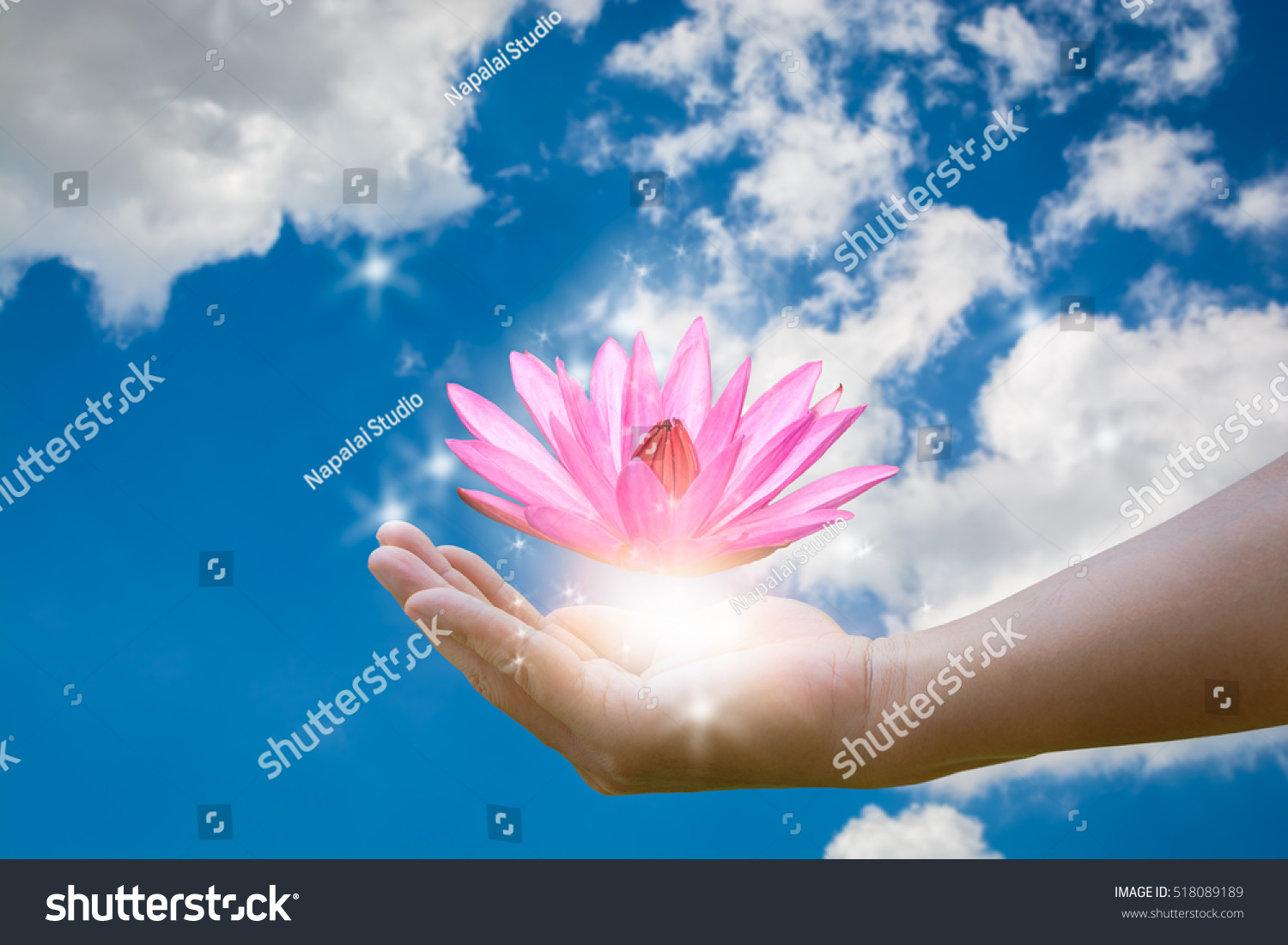 Man Holding Lotus Water Lily Flower Stock Photo Edit Now 518089189