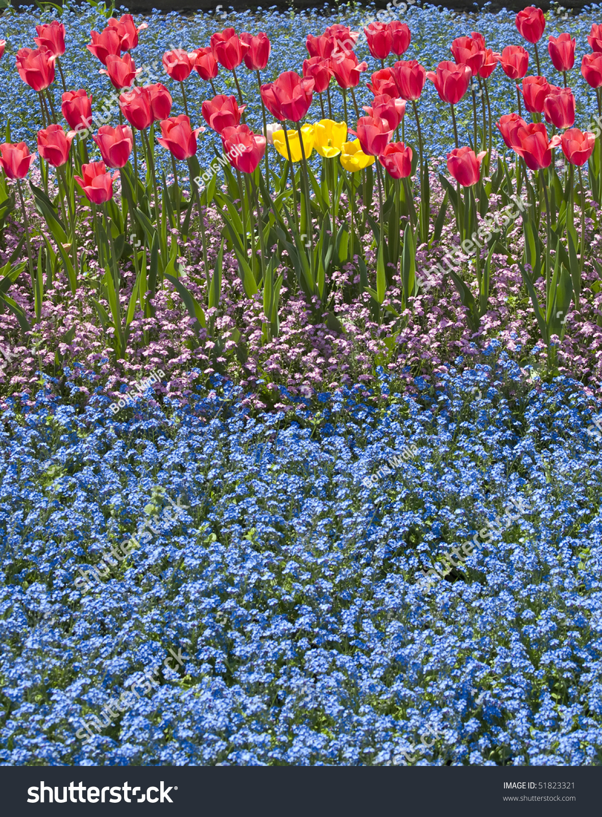 Flower Bed Of Small Blue And Pink Flowers With Red And