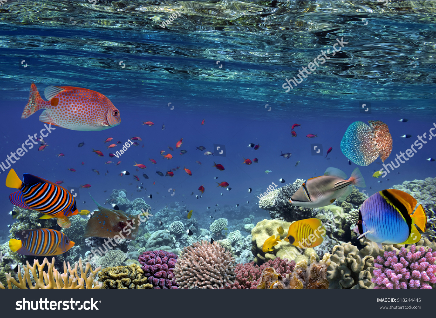 Colorful Reef Underwater Landscape Fishes Corals Stock ...