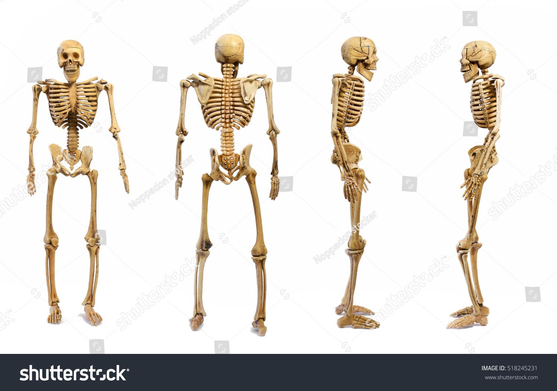 Pattern Human Skeletons Isolated On White Stockfoto Jetzt