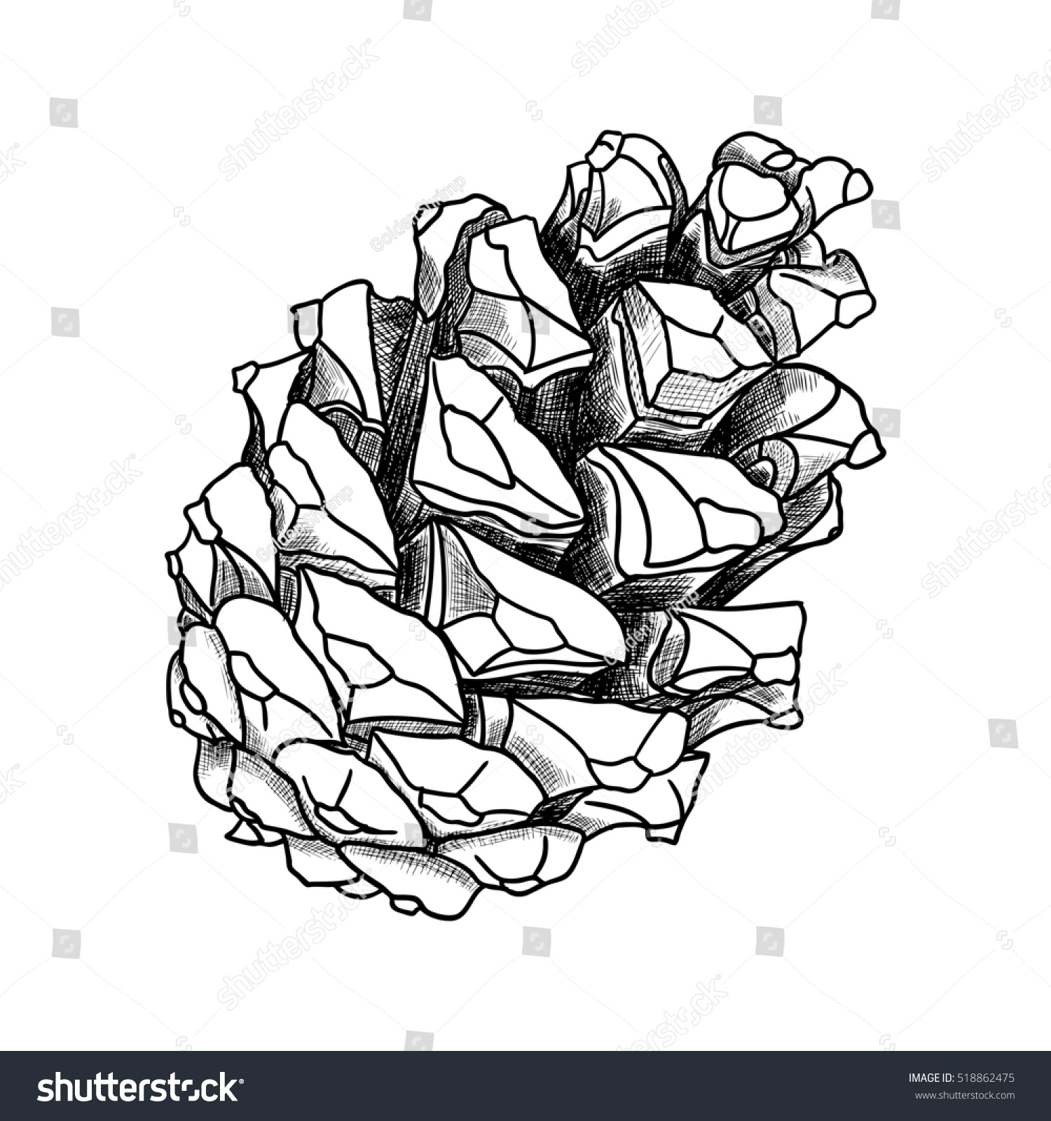Hand Drawing Pine Cone Pinecone Drawing Decoration Of Greeting