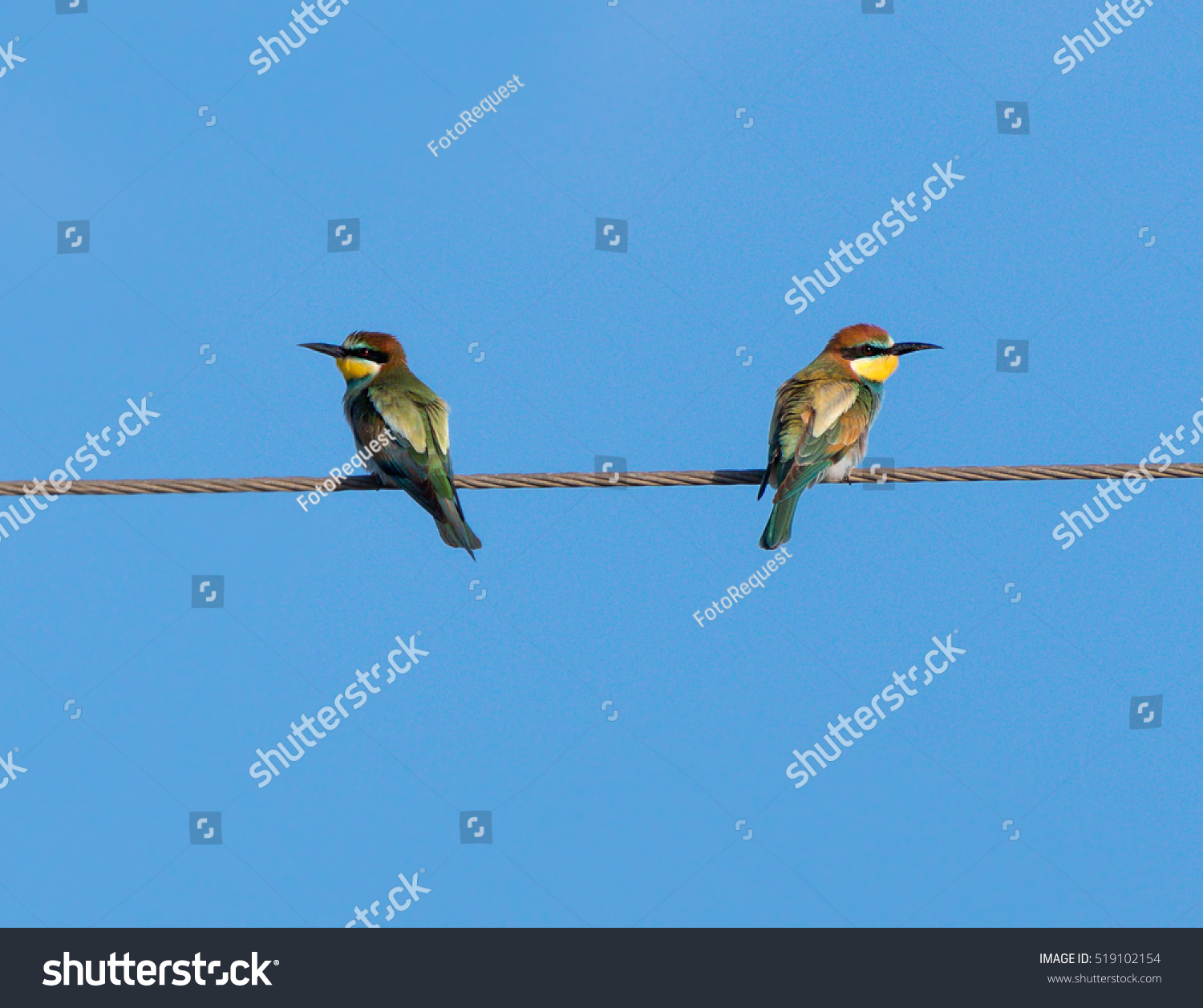 Two European Beeeaters Perched On Wire Stock Photo (Edit Now ...