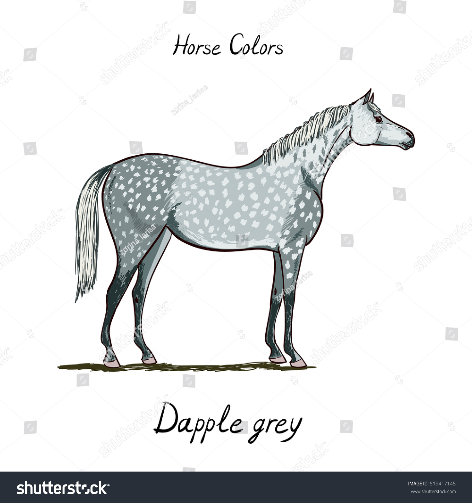 Horse color chart on white equine stock vector 519417145 horse color chart on white equine dapple grey coat color with text equestrian scheme nvjuhfo Gallery