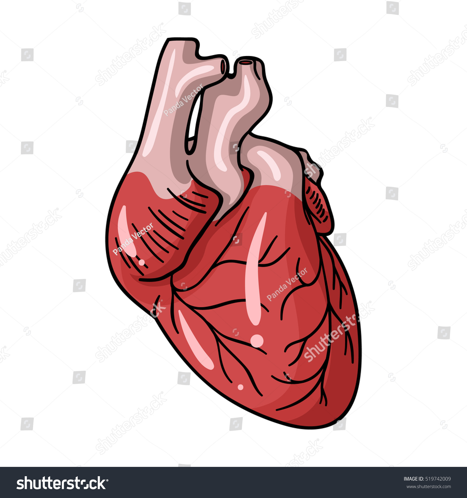 Human heart icon in cartoon style… Stock Photo 519742009