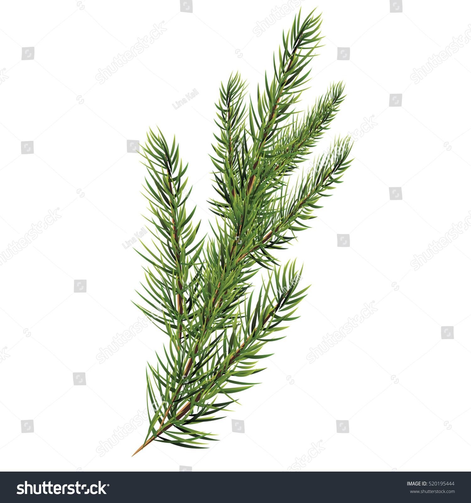 christmas tree branch vector - photo #15