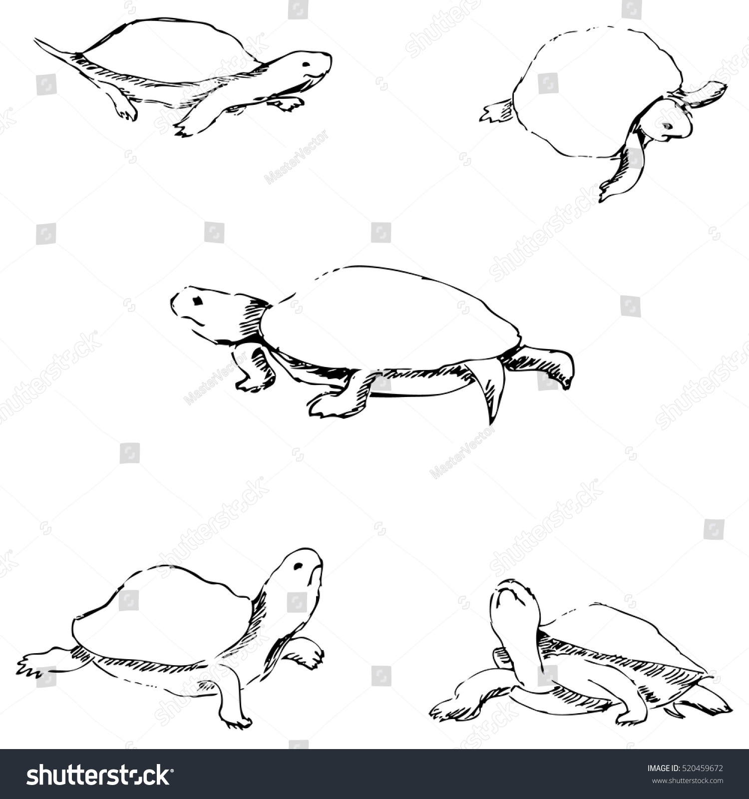 Turtles pencil sketch by hand stock vector royalty free 520459672