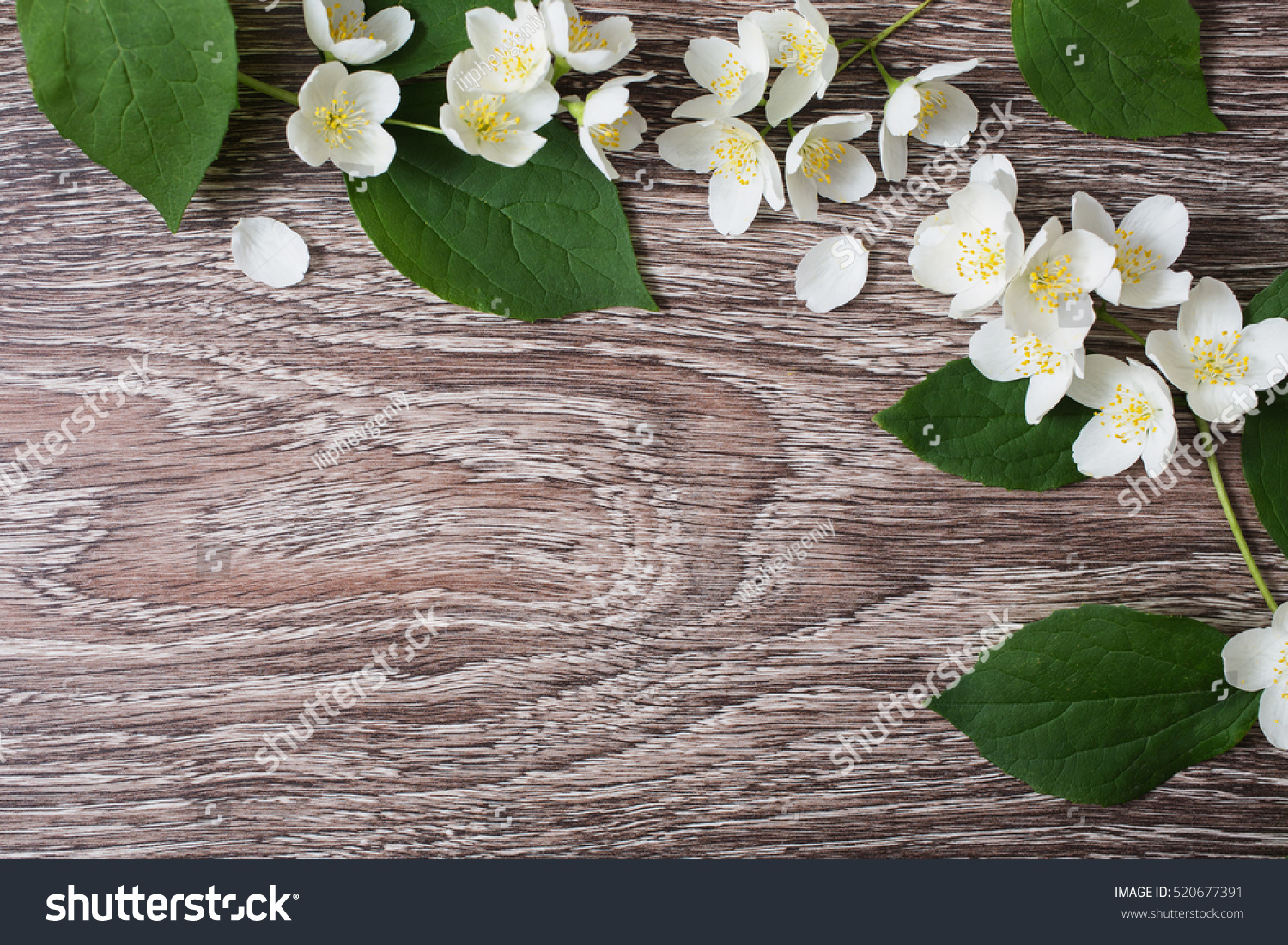 Frame of white flowers and jasmine petals lie on the wooden frame of white flowers and jasmine petals lie on the wooden background wedding invitation card space for text and design ez canvas izmirmasajfo