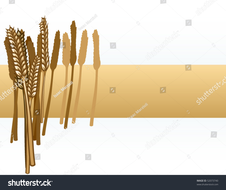 thesis on wheat crop Drought tolerance studies in wheat (triticum aestivum l)  wheat crop needs water for the whole growth  drought tolerance studies in wheat.