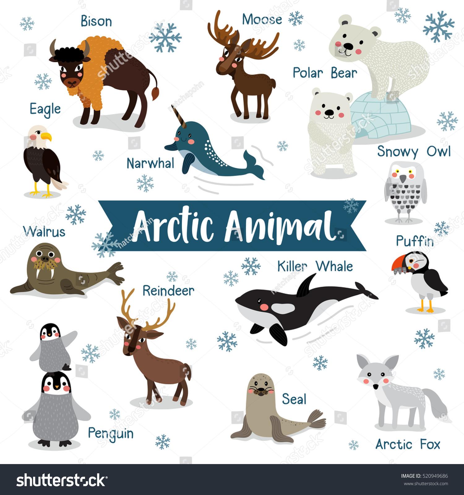 Arctic Creature Cartoon On White Background Stock Vector 520949686 ...