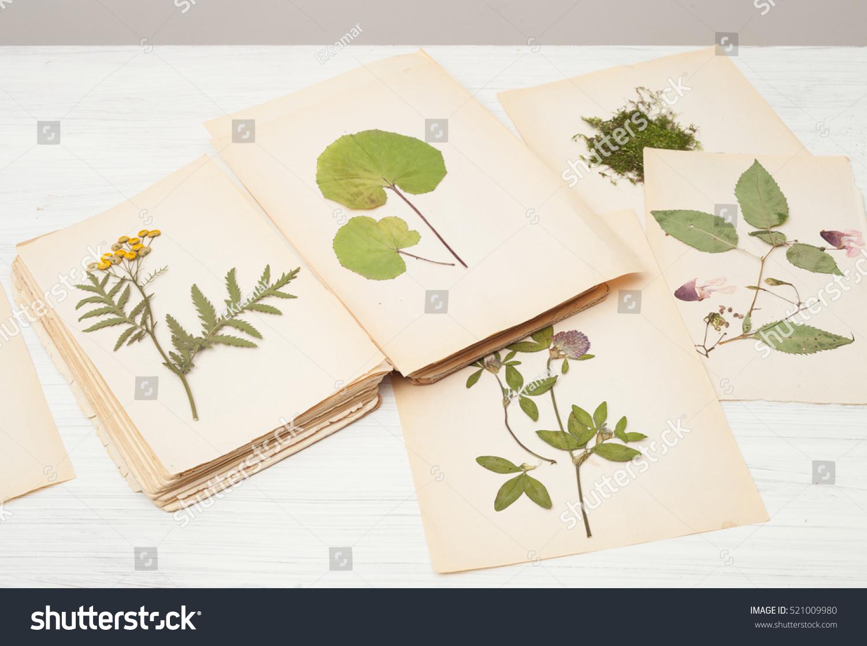 Dried Pressed Flowers On Vintage Paper Background Copy Space Ez