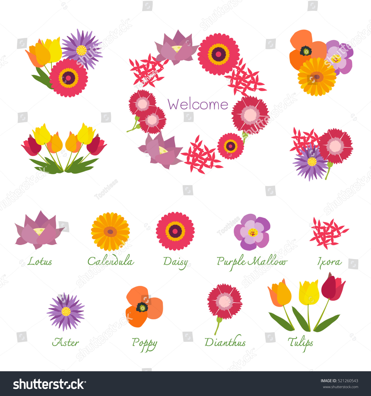 Tropical Flowers Isolated Names Showing Bouquets Stock Vector ...