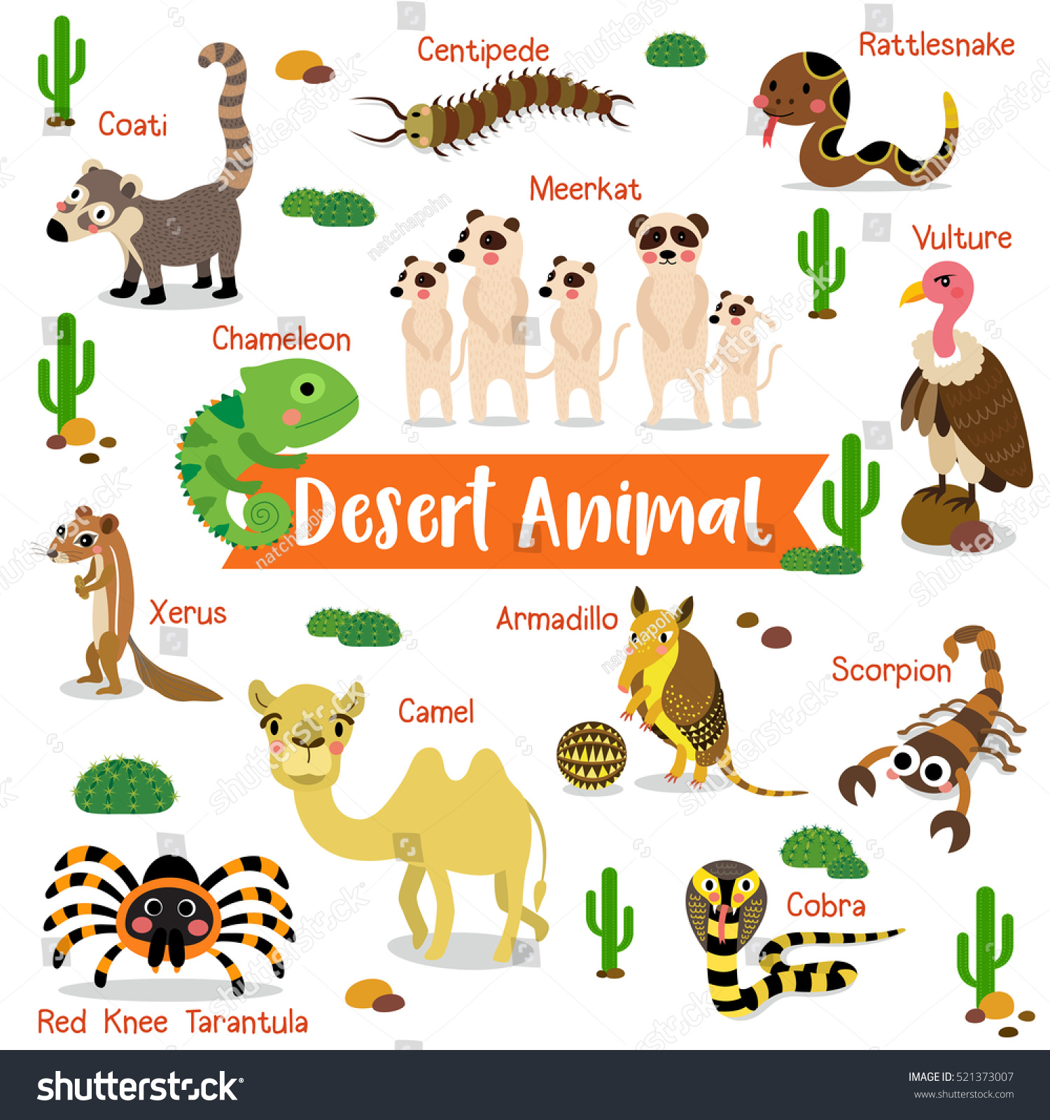 Desert animals with names chart