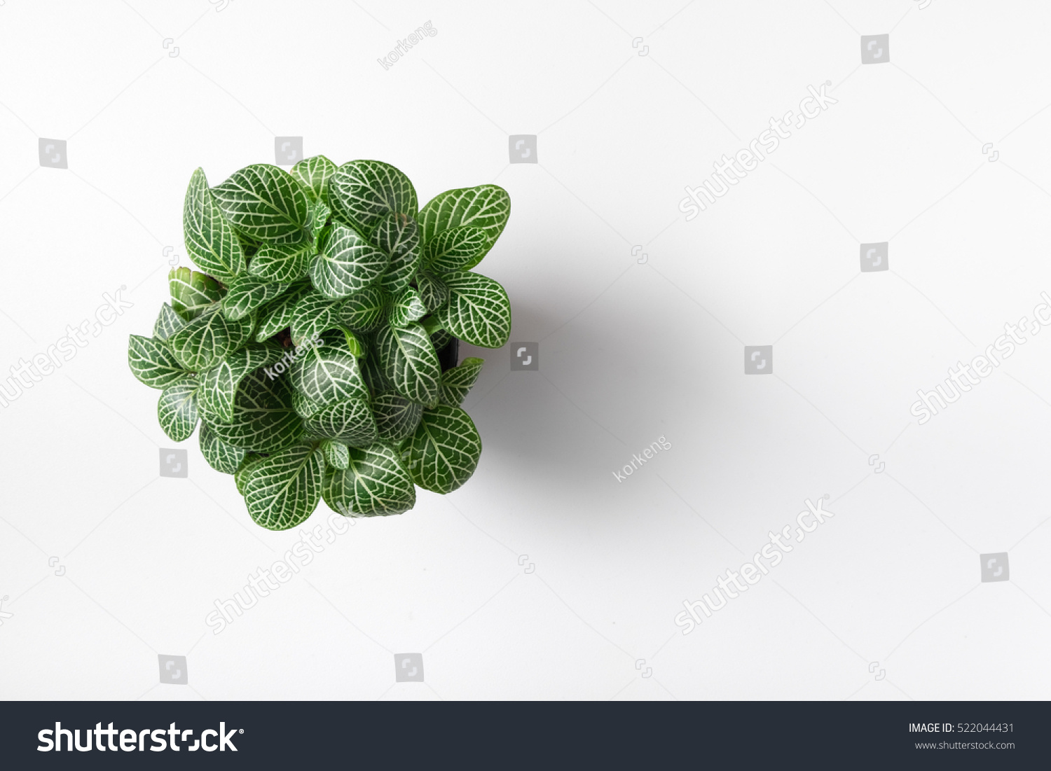 Top view plant in pot isolated on white desk background #522044431
