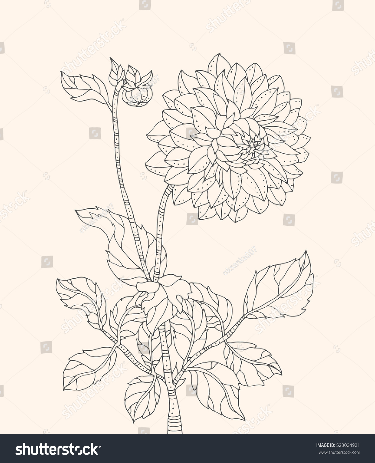 Chrysanthemum flower. Vector artwork. Coloring book page for adult ...