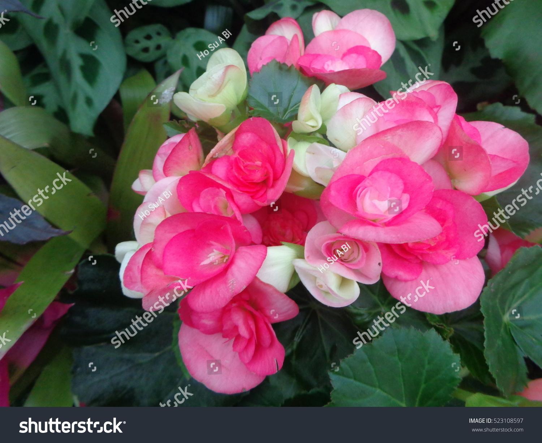 Beautiful exotic flowers botanic garden stock photo edit now beautiful exotic flowers in botanic garden izmirmasajfo