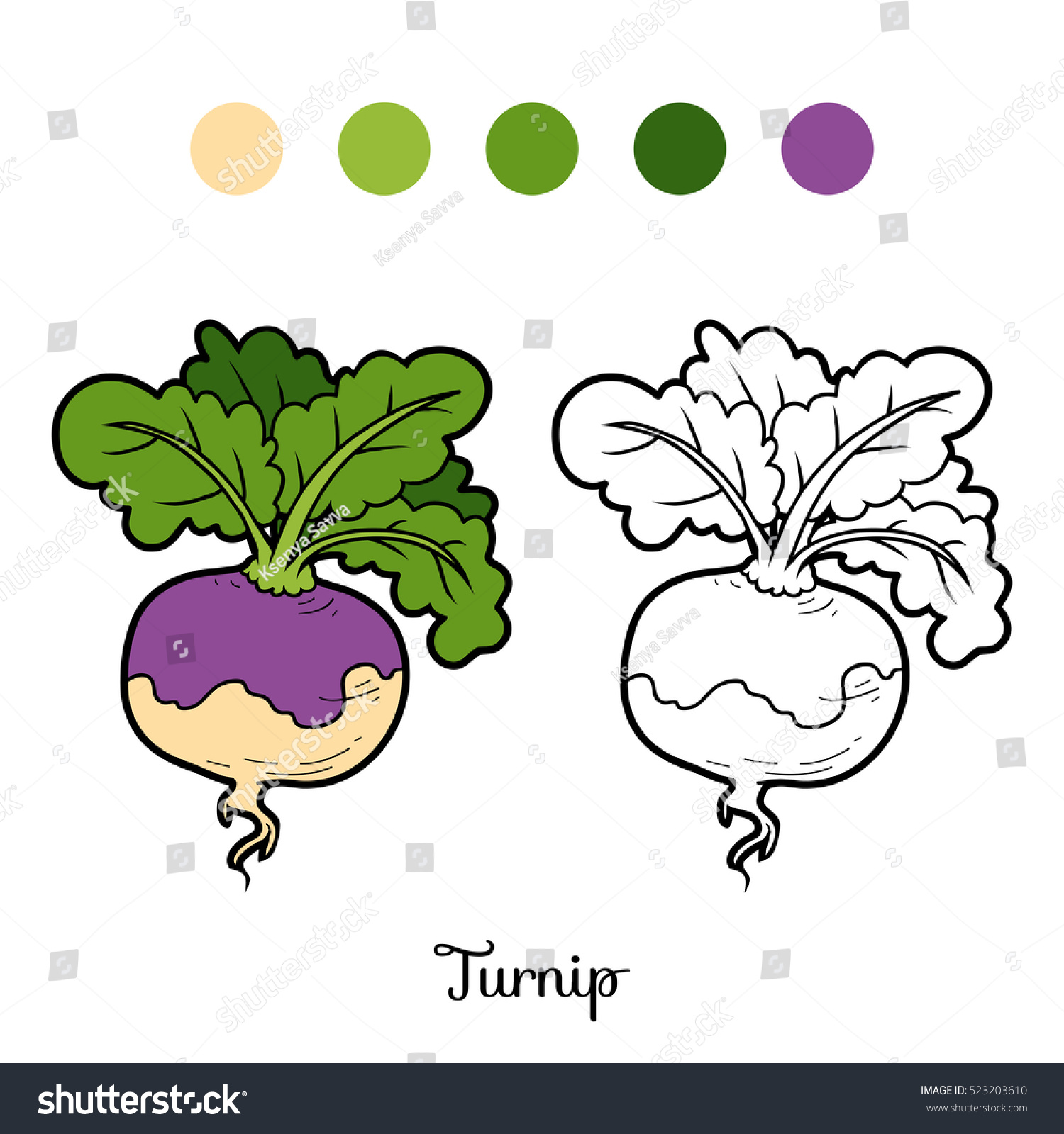 Coloring Book For Children Vegetables Turnip