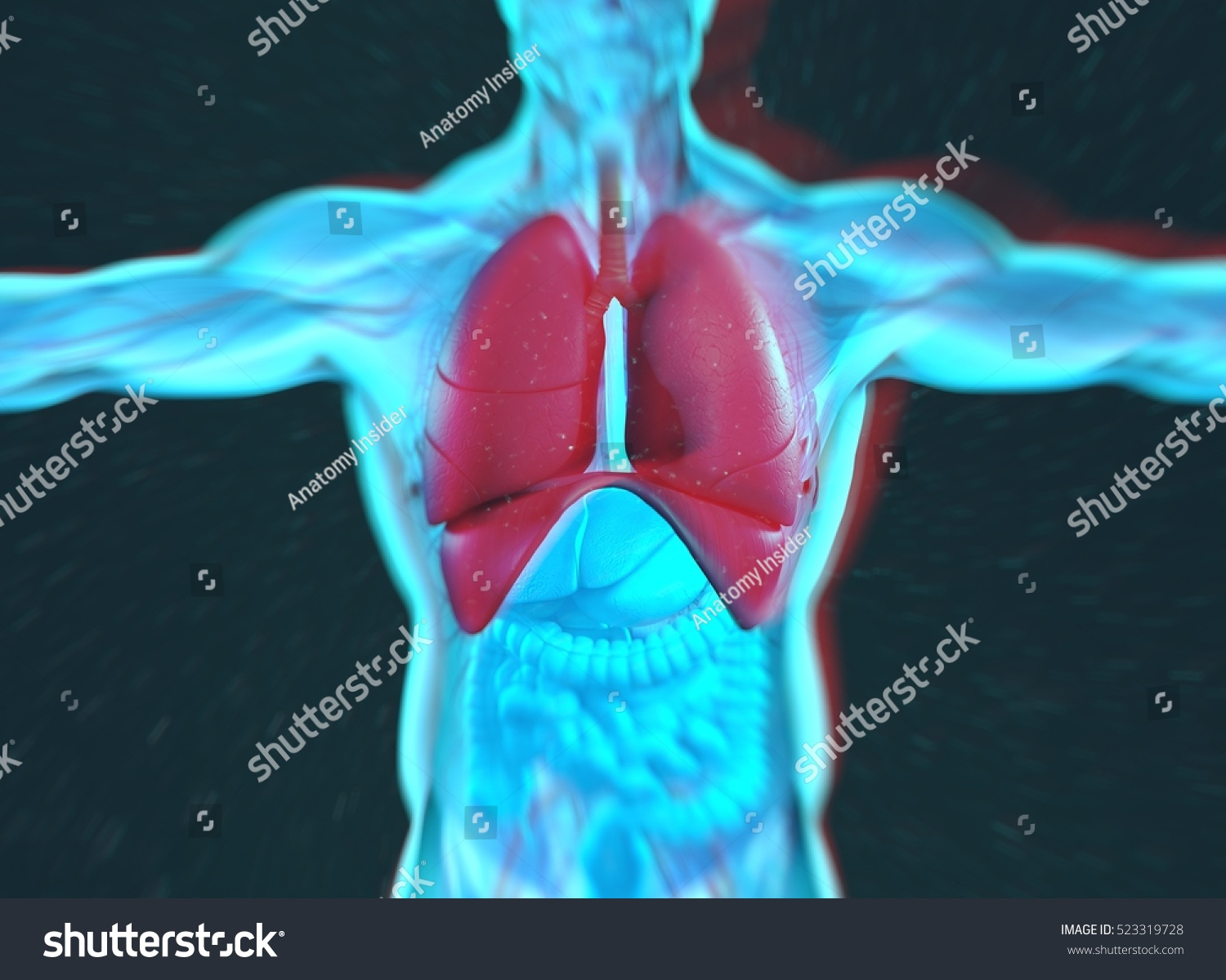 Human Anatomy Lungs Lung Cancer Disease Stock Illustration 523319728 ...
